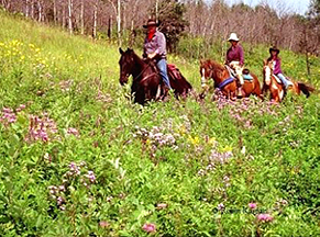 horseback riding the trails of the southern Rocky Mountains enjoying native plants and wildlife